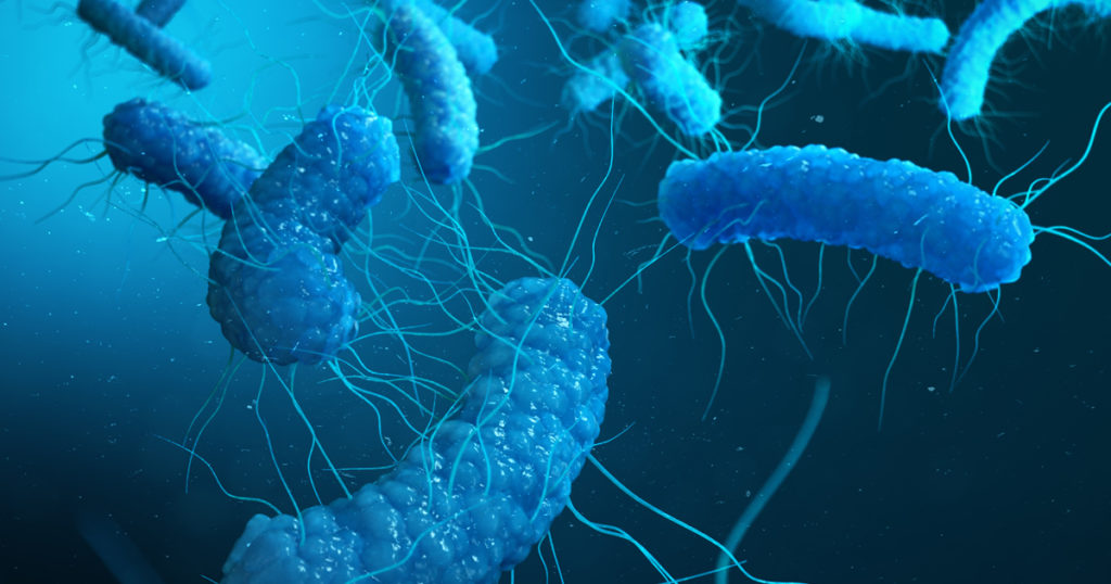 RC Nutritionals offers the Bacillus strain of probiotics to support healthy digestion and immune support. The Bacillus strain is a spore forming probiotic protecting it from the harsh conditions in the digestive tract